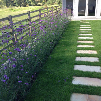 Garden for non-gardeners, verbena border