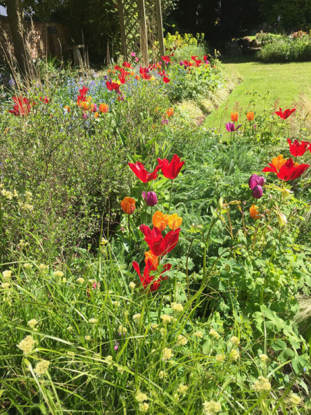 Garden deisgn for Grown Up with lots of colour