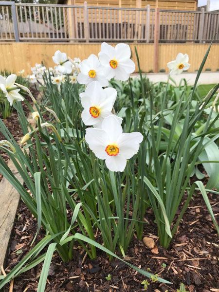 Multi-level-garden-spring-2019-29