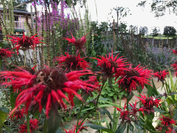 Multi-level-garden-spring-2019-34