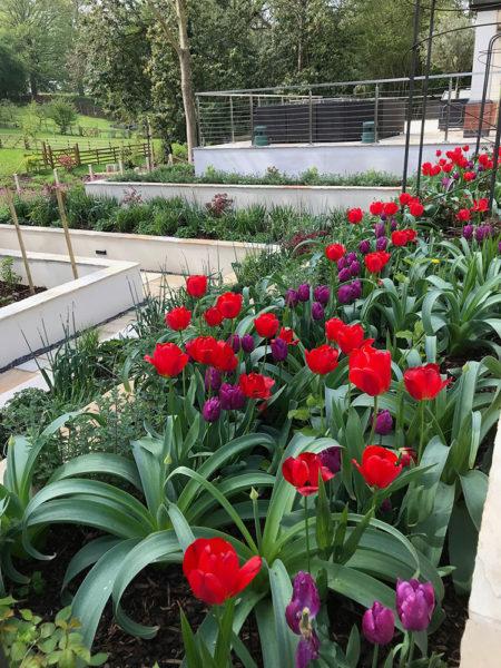 Multi-level-garden-spring-2019-8