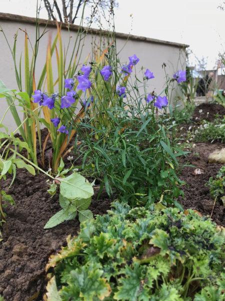 garden-landscape-multi-level-10