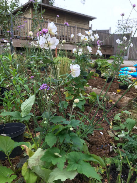 garden-landscape-multi-level-6