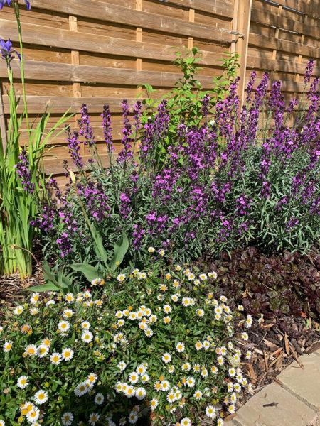 contemporary colour garden