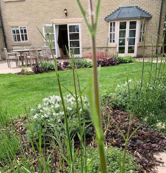 small-garden-development-3