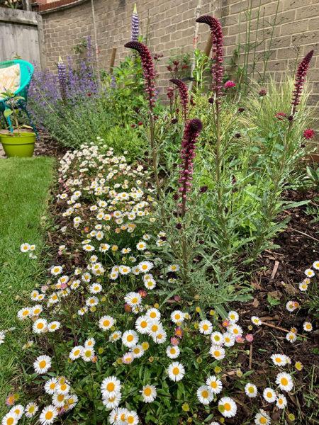 small-garden-development-6